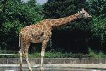 동물원의 동물들